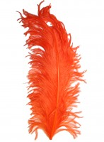 Ostrich plumes strutsherl orange